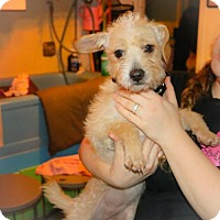 Adopt A Pet :: Marty - Eugene, OR