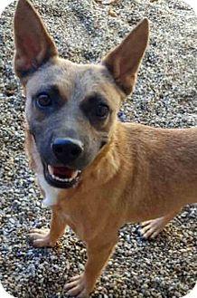 Shepherd (Unknown Type) Mix Dog for adoption in Gahanna, Ohio - ADOPTED!!!   Tiki