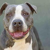 Adopt A Pet :: JANE - Los Angeles, CA