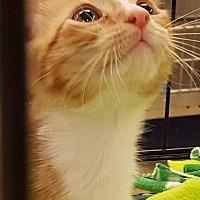 Adopt A Pet :: Julio - Orlando, FL