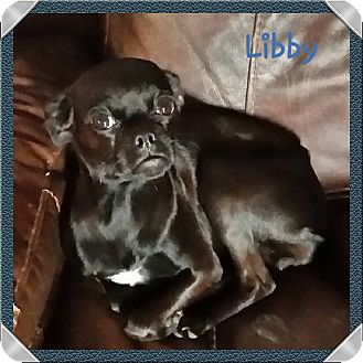 Pug Mix Dog for adoption in Snyder, Texas - Libby