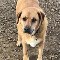 Adopt A Pet :: Nelly - The Dalles, OR