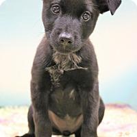 Adopt A Pet :: Jude - Southington, CT