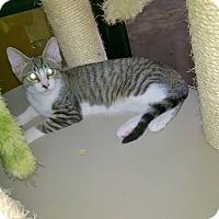 Adopt A Pet :: Peeka - Yuba City, CA