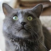 Adopt A Pet :: Tony III - Fountain Hills, AZ