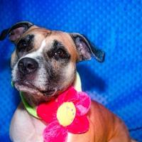 Adopt A Pet :: Elsie Enchanted - Mission, KS