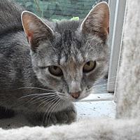 Adopt A Pet :: Kiki - Colmar, PA