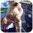 Photo 4 - Schnauzer (Miniature) Dog for adoption in Oak Ridge, New Jersey - Qwerty