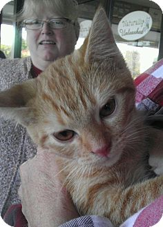 Domestic Shorthair Cat for adoption in Parkton, North Carolina - PJ