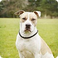 Adopt A Pet :: RIVER - Kingston, WA
