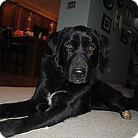 Adopt A Pet :: Dorothy - Foster, RI