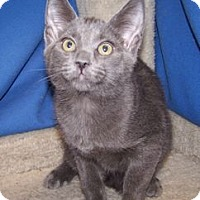 Adopt A Pet :: K-Twinkle1-Royal - Colorado Springs, CO