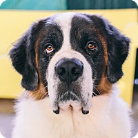 Adopt A Pet :: Neil - Seattle, WA