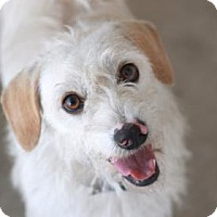 Adopt A Pet :: NORMAN - Kyle, TX