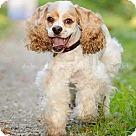Adopt A Pet :: Turley