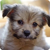 Adopt A Pet :: MR CUTIE PIE - Marina Del Ray, CA