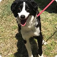 Adopt A Pet :: BETSY - San Pedro, CA