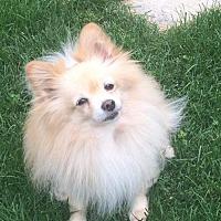 Adopt A Pet :: Bear 3296 - Toronto, ON