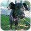 Photo 1 - Whippet Mix Dog for adoption in San Clemente, California - NINA
