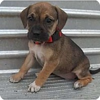 Adopt A Pet :: Lady - Clayton, OH
