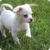 Adopt A Pet :: Charlotte - La Habra Heights, CA