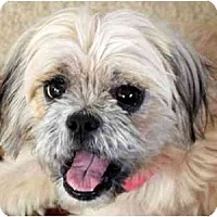 Adopt A Pet :: Sally Anne-VA - Mays Landing, NJ