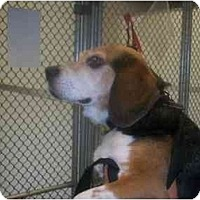 Adopt A Pet :: Max - Indianapolis, IN