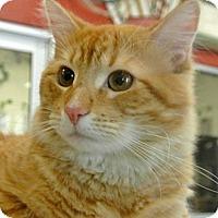 Adopt A Pet :: Felix - white settlment, TX