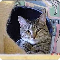 Adopt A Pet :: Twixie - Chicago, IL