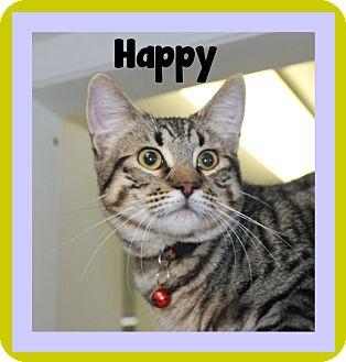 Domestic Shorthair Cat for adoption in Covington, Louisiana - Happy