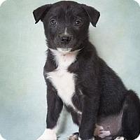 Adopt A Pet :: Wally - Phoenix, AZ