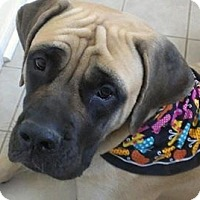 Adopt A Pet :: Daisy - Phoenixville, PA