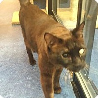 Adopt A Pet :: Seth - Davis, CA