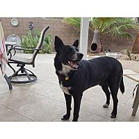Adopt A Pet :: Hershel - Tempe, AZ