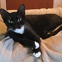 Adopt A Pet :: Caroline - Houston, TX