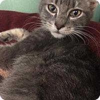 Adopt A Pet :: Barnacle Boy - Philadelphia, PA