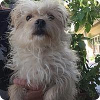 Adopt A Pet :: Hudson - Temecula, CA