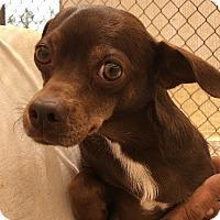 Adopt A Pet :: Oakleigh - Phoenix, AZ