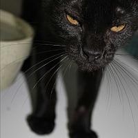 Adopt A Pet :: Magic - Cuero, TX