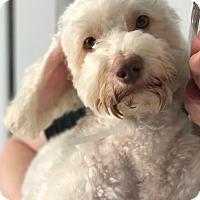 Adopt A Pet :: Kaplan - Thousand Oaks, CA
