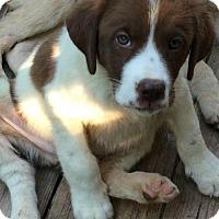 Adopt A Pet :: Cannon - Boston, MA