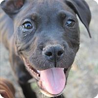 Adopt A Pet :: Neptune - Lodi, CA