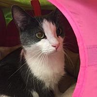 Adopt A Pet :: Bones - Alexandria, VA