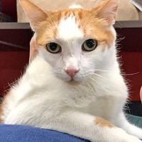 Adopt A Pet :: Oskar is Oh-So-Friendly - Brooklyn, NY
