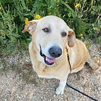 Adopt A Pet :: Marley - Crocker, MO