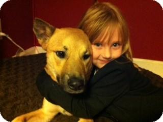 German Shepherd Dog/Australian Kelpie Mix Dog for adoption in Gilbert, Arizona - Allie