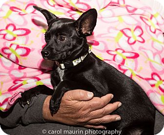 Terrier (Unknown Type, Small) Mix Dog for adoption in Winston-Salem, North Carolina - Bonnie
