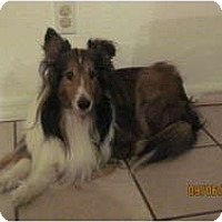 Adopt A Pet :: Duke - apache junction, AZ