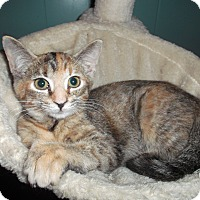 Adopt A Pet :: Lola - Frederick, MD
