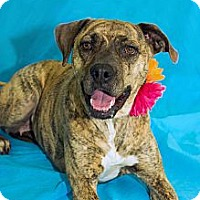Adopt A Pet :: Snickers - Lima, OH